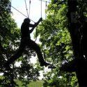 Climb-Up-Trees